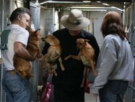 Animal Resources at San Bernadino Shelter
