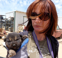 Animal Resources at Mojave Desert rescue