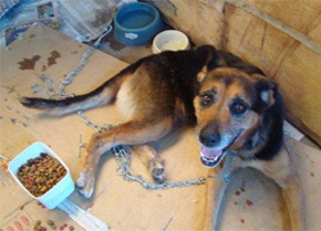 dog in Brazil shelter