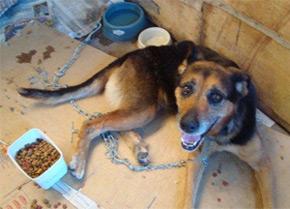 dog in Brazil shelter
