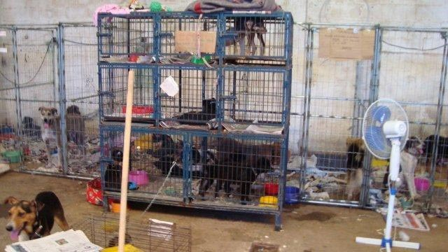 animals in a shelter in Teresopolis, Brazil